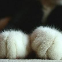Cute paws.