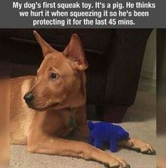 First squeaky toy