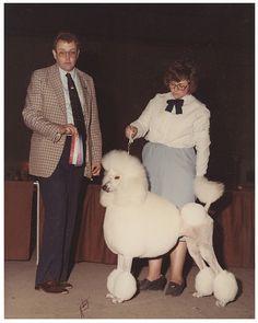 Vintage dog show photo.
