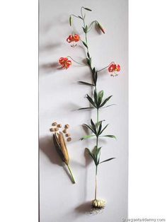 Western Lily (Lilium occidentale), 3-D crepe paper sculpture by Aimée Baldwin