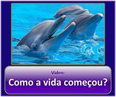 A Vida — Teve um Criador? Por favor veja o vídeo: https://www.jw.org/pt/publicacoes/videos/#mediaitems/AllVideos/pub-imv_T_1_VIDEO. Em seguida, leia o folheto: https://www.jw.org/pt/publicacoes/livros/vida-teve-criador/. (How did life begin? Please watch the video, then read the brochure.)