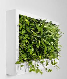 green wall plant home deco