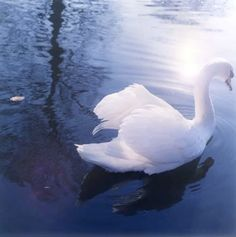 I am but an ugly duckling, but someday I'll be a swan