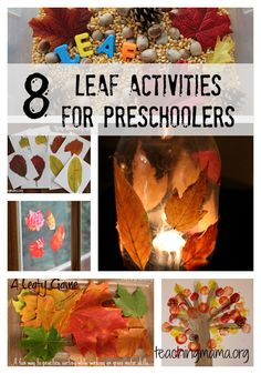 8 Leaf Activities for Preschoolers is a great activity for Fall! via Gray @ Teaching Mama Autumn Activities For Kids, Fall Preschool, Science Activities, Toddler Activities, Preschool Activities, Preschool Projects, Preschool Learning, Learning Games, Early Learning