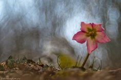 Pink by Alberto Baruffi on 500px