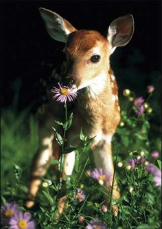 Bambi may be cute, but deer can carry #ticks into your yard.   http://www.tickencounter.org/prevention/dont_attract_wildlife