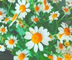 #wildflowers #daisies