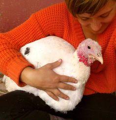 A Vegan Thanksgiving celebrates good food, activism and hope - Virginia Messina