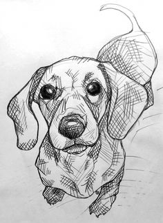 dog drawing Top Tips, Tricks, And Techniques For That Perfect drawing tutorial Cool Art Drawings, Pencil Art Drawings, Art Drawings Sketches, Sketches Of Dogs, Animal Sketches, Animal Drawings, Drawings Of Dogs, Dachshund Art, Dachshund Drawing