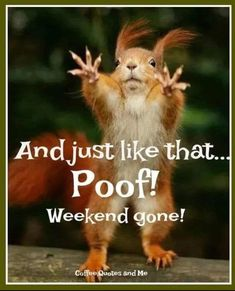 Funny Photos Funny Animal Pictures Funny Animals Squirrel – Fit for Fun Funny Cute, Funny Jokes, Hilarious, Funny Weekend Memes, Funny Stuff, Tgif Funny, Funny Sarcasm, Funny Animal Memes, Funny Animal Pictures