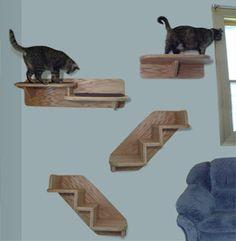 Old Maid Cat Lady: Cats Need to Climb!