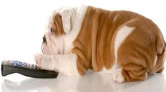 Is this real? A television channel created and programmed for dogs??: