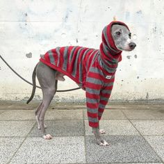 Italian Greyhound Clothing, Fleece, Long sleeves T-shirt, Stripe [Raspberry/Gray] Dog Harness, Dog Leash, Italian Greyhound Clothes, Large Dog Sweaters, Pet Clothes, Dog Clothing, Dog Sweater Pattern, Diy Vetement, Dog Furniture