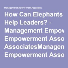 How Can Elephants Help Leaders? - Management Empowerment AssociatesManagement Empowerment Associates