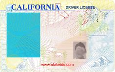 Template New York Drivers License Editable Photoshop File D