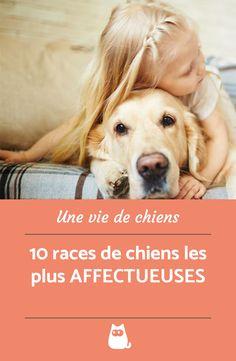 Golden Labrador, Dog Health Care, Yorkshire Terrier, Dog Days, Puppy Love, Dog Breeds, Your Dog, Dog Lovers, Puppies