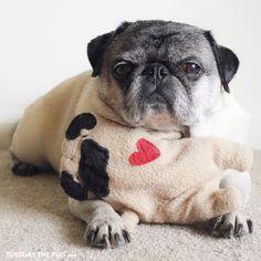 Social Pug Profile | Tuesday http://www.thepugdiary.com/social-pug-profile-tuesday/