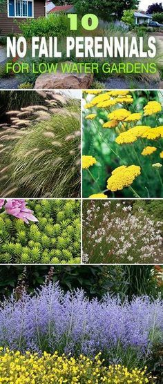 10 No Fail Drought Tolerant Perennials for Low Water Gardens 10 No Fail Perennials for Low Water Gardens! • Great tips and ideas on water wise and drought tolerant gardening with perennials! Garden Shrubs, Lawn And Garden, Garden Tips, Big Garden, Garden Fun, Fruit Garden, Xeriscape Plants, Front Garden Landscape, Perennials