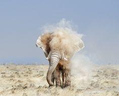 Elephant, dust