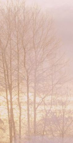 pink and peach photography Soft Colors, Pastel Colors, Pastel Pink, Winter Pastels, Winter Colors, Color Lavanda, Photo D Art, The Blushed Nudes, Color Rosa