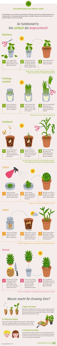 The infographic shows you how to make new vegetables from kitchen leftovers - Gartenideen & Tipps - Garten Design Herb Garden, Indoor Garden, Vegetable Garden, Garden Plants, Indoor Plants, Garden Hedges, Organic Gardening, Gardening Tips, Urban Gardening