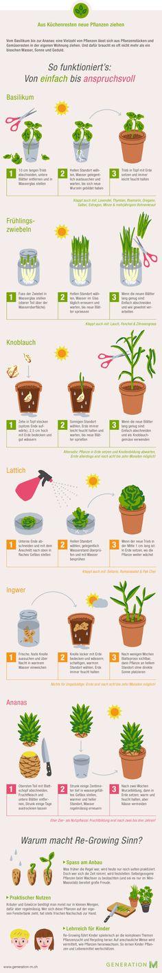 Migros - Infografik Gemüse aus Küchenresten - Generation M
