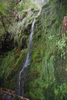 Riberio Frio, Madeira, Portugal