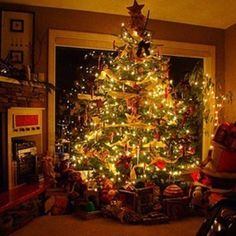 on Insta Web Viewer Days Till Christmas, Xmas, Christmas Tree, Christmas Decorations, Holiday Decor, View Photos, Hate, Thanksgiving, Swimming