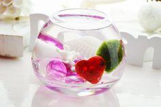 Lucky Frog Live Marimo Moss Ball Mini Aquarium Terrarium i