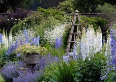 Credit - Levens Hall, Cumbria, so in love with the colour and planting