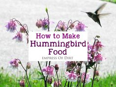 Hummingbirds are favorite garden visitors for many of us and there are plenty of things we can do to ensure they have what they need to thrive.