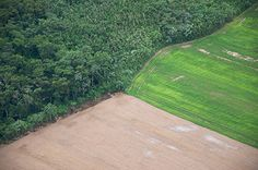 In the past 20 years alone, an area the size of two Germanys has been clear cut from this ancient tropical rainforest and this is hardly the full extent of the damage. Animal Agriculture, Amazon Rainforest, Environmental Issues, Palawan, Science And Nature, Natural World, Climate Change, Wildlife, Rainforests