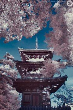 Cherry blossoms from momiji: Sankeien Gardens, Yokohama, Japan  stunning!