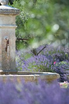 French water fountain with lavender plants ( Lavender Cottage, French Lavender, Lavender Fields, Lavender Flowers, Lavender Plants, Lavander, Garden Fountains, Fountain Garden, Outdoor Fountains