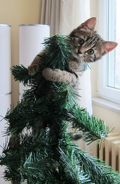 Cat in a Christmas Tree, Istanbul 2012 by istanbulmike, via Flickr