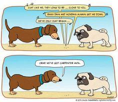 Not often I find cartoons featuring pugs!
