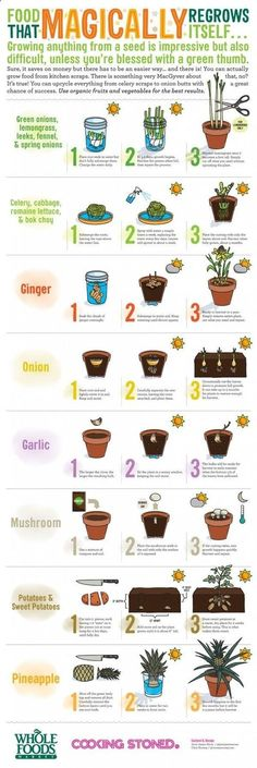 Food-That-Magically-Regrows-Itself. Love this! We are growing garlic now!