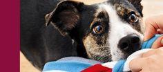 Gewinnspiel: MEIN HUND HAT EINE SEELE – Was Ihr Hund schon immer sagen wollte & was Sie von ihm lernen können   Hunde.de