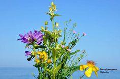 Букет полевых цветов и цветочно-летнее настроение - Мое Настроение - социальная сеть для тех кому хорошо