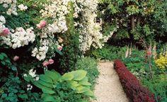 Small Backyard, White Roses, Barberry Hedge William Morrow Garden Design Washington D. Urban Garden Design, Small Garden Design, Small Space Gardening, Little Gardens, Small Gardens, Outdoor Gardens, Tropical, Garden Cottage, Dry Creek