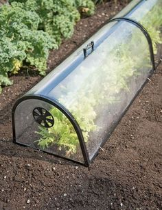 Cozy Garden Cloche Protects a Row of Plants