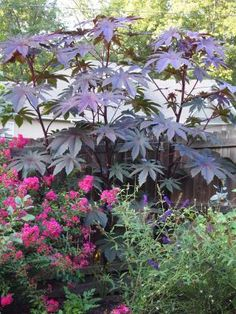 Castor bean plant for height & privacy.  They can grow over 7' tall in one season.  Keep kids and pets away from the beans.