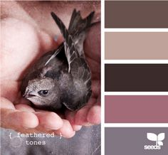 Front door colors--Oooh I love all these (except maybe not the mauve)