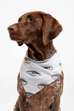 Wesley Bird for DENY His 'n Hers Pet Bandana