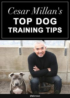 Cesar millan book on dog training