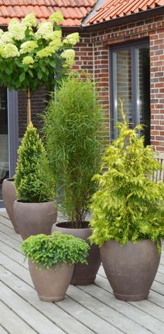 1000+ ideas about Sichtschutz Pflanzen on Pinterest  Container Plants ...