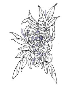 Tattoo design chrysanthemum and up for grabs