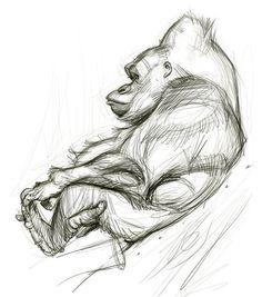 Jason Seiler - Gorilla sketch