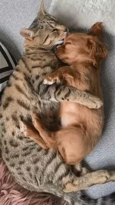 Cute Animal Videos, Cute Animal Pictures, Baby Pictures, Cute Little Animals, Cute Funny Animals, Cat And Dog Videos, Sleeping Puppies, Funny Cats And Dogs, Funny Kittens