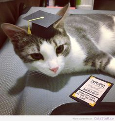 16 Cats-Graduation Day... ideas | cats, cats and kittens, feline